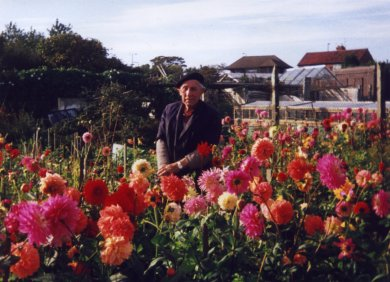 Photograph of Bill with his prize winning Dahlias
